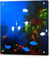 Aruba Reef Acrylic Print