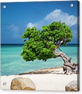 Aruba Tree Acrylic Print