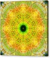Moss Mandala Acrylic Print