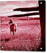 As Bambi Sees It Acrylic Print