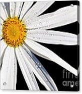 As Bright As A Daisy... Acrylic Print