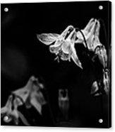 As Darkness Falls Acrylic Print