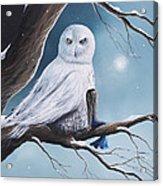 White Snow Owl Painting Acrylic Print