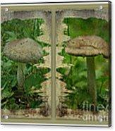 As I Age - A Mushroom's Tale Acrylic Print