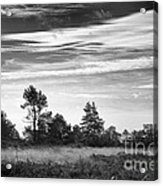 Ashdown Forest In Black And White Acrylic Print