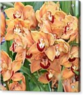 Asian Corsage Orchid Acrylic Print