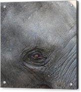 Asian Elephant Face Acrylic Print