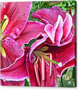 Asian Lily Flowers Acrylic Print