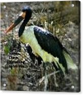 Asian Stork With Message Acrylic Print
