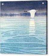 Asian Swan Acrylic Print
