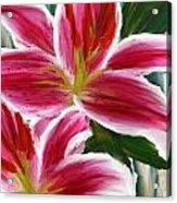 Asiatic Lily- Asiatic Lily Paintings- Pink Paintings Acrylic Print