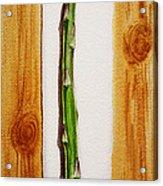 Asparagus Tasty Botanical Study Acrylic Print