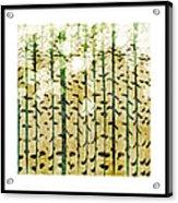 Aspen Colorado Abstract Square 3 Acrylic Print