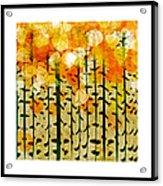 Aspen Colorado Abstract Square 4 Acrylic Print