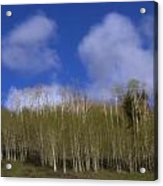Aspen Dream Acrylic Print