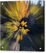Aspen Explosion Acrylic Print