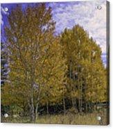 Aspen Goldrush Acrylic Print by Tom Wilbert