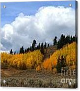 Aspen Hillside Acrylic Print
