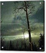 Aspen In Moonlight Acrylic Print