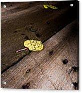 Aspen Leaf Acrylic Print