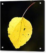 Aspen Leaf  In Fall Acrylic Print