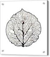 Aspen Leaf Skeleton 1 Acrylic Print