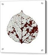 Aspen Leaf Skeleton 2 Acrylic Print
