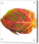 Aspen Leaf Tropical Fish 1 Acrylic Print