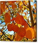 Aspen Leaves Acrylic Print