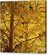 Aspen Leaves Textured Acrylic Print