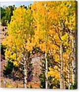 Aspen Meadows II Acrylic Print