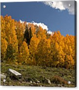 Aspen On The Road To Telluride Dsc07397 Acrylic Print