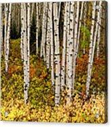 Aspen Panoramic Acrylic Print