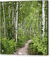 Aspen Path Acrylic Print