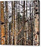 Aspen Patterns 14438 Acrylic Print
