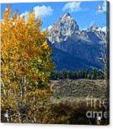 Aspen Peaks Acrylic Print