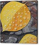Aspen Rain Acrylic Print