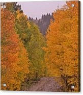 Aspen Road Acrylic Print