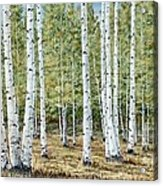 Aspen South Saddle Blue Mtn 24 X 48 Acrylic Print