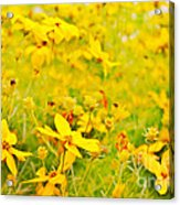 Aspen Sunflower Acrylic Print
