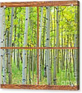 Aspen Tree Forest Autumn Picture Window Frame View  Acrylic Print
