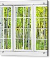 Aspen Tree Forest Autumn Time White Window View  Acrylic Print by James BO  Insogna