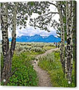 Aspen Trees On Trail To Jackson Lake At Willow Flats Overlook In Grand Teton National Park-wyoming  Acrylic Print
