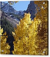 Aspen Window Acrylic Print