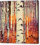 Aspenglow Acrylic Print