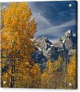 1m9352-aspens In Autumn And The Teton Range Acrylic Print
