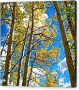 Aspens In The Clouds Acrylic Print
