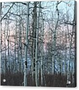 Aspens In Twilight Acrylic Print