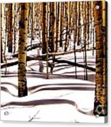 Aspens In Winter Acrylic Print by Claudette Bujold-Poirier