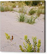 Assateague Dunes 2 Acrylic Print